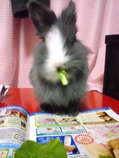 小松菜おいしい♪