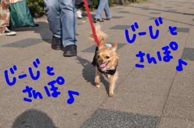 じーじと散歩