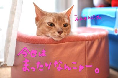 使ってくれたー!!!