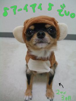 猿になりきった犬