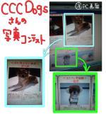 CCCDogs