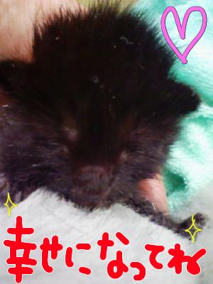 幸せの黒猫☆