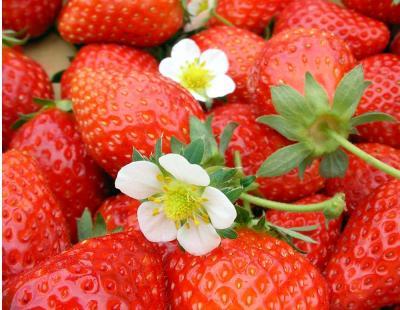 旭市飯岡の斉藤勝雄さんちのイチゴとイチゴの花