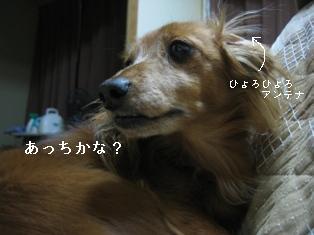 IMG_6279blog.jpg
