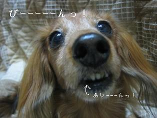 IMG_6284blog.jpg