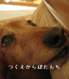 IMG_6503blog.jpg