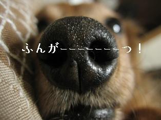 IMG_6519blog.jpg