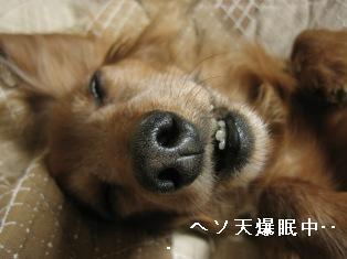 IMG_6596blog.jpg