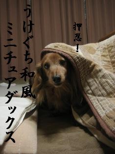 IMG_7040blog.jpg