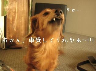 IMG_7052blog.jpg