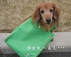IMG_7098blog.jpg