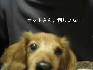 IMG_7225blog.jpg