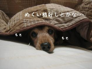 IMG_7306blog.jpg