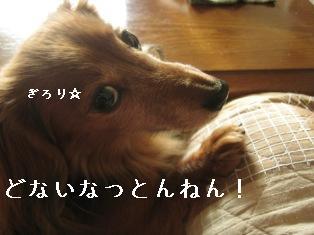 IMG_7370blog.jpg
