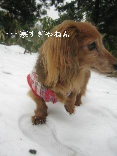 IMG_7595blog.jpg