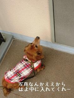 IMG_7609blog.jpg