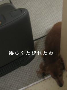 IMG_7711blog.jpg