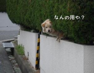 P1000263blog.jpg
