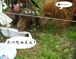 P1000324blog.jpg