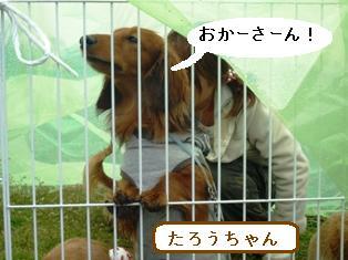 P1000345blog.jpg