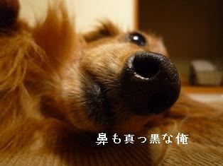 P1000372blog.jpg