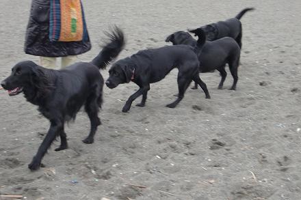 黒犬の行進