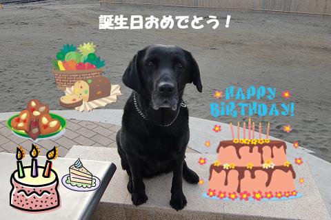 今日はクロの誕生日