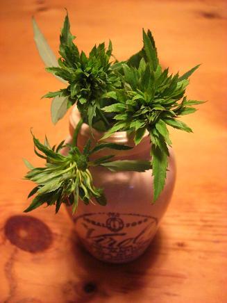 緑のバラ2