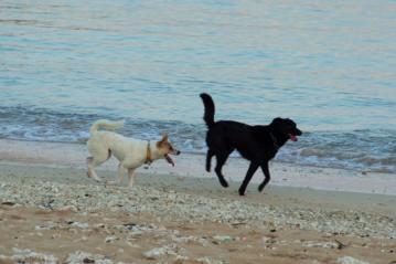 犬(与那国島)