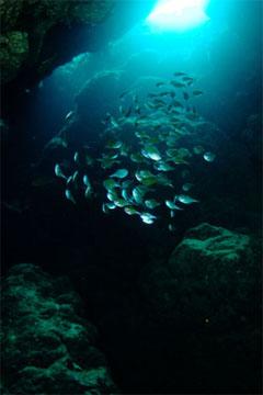 ミナミハタンポ(黒島)
