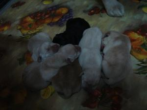cuccioli2.jpg