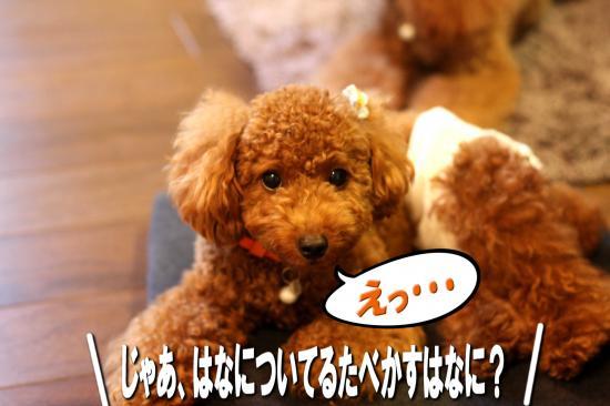 10_20080923043003.jpg