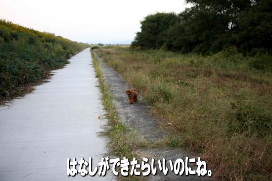 10_20081021182554.jpg
