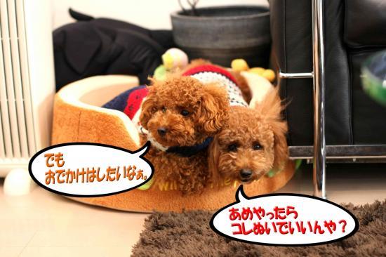 10_20081026120827.jpg
