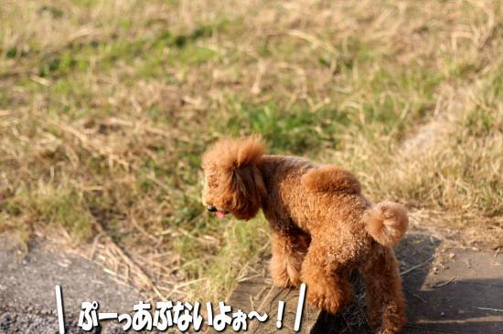 10_20081124001803.jpg