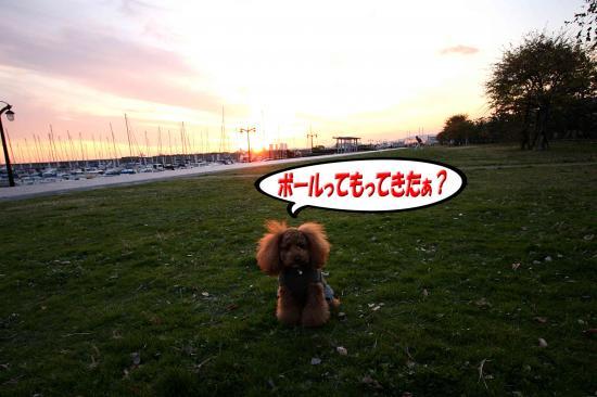 10_20081125233359.jpg