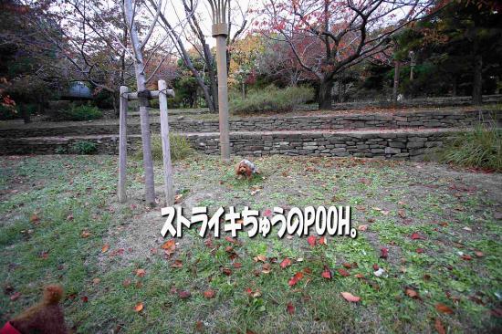 10_20081127212201.jpg