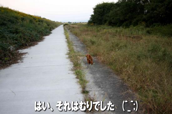 11_20081021182605.jpg