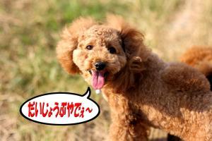11_20081124002057.jpg