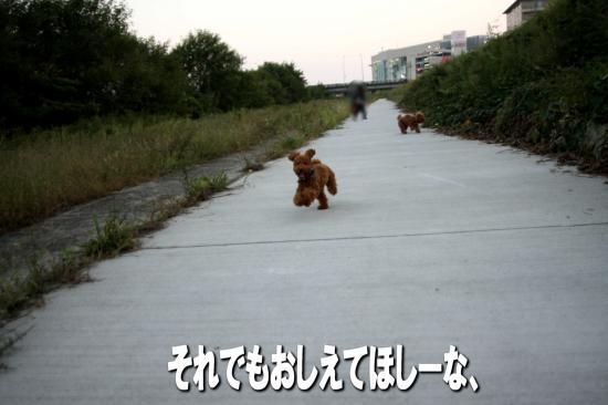 12_20081021182621.jpg