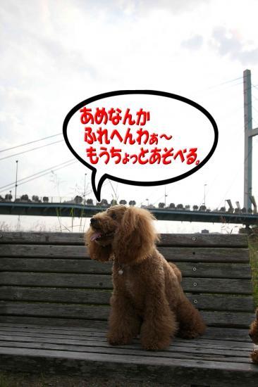 12_20081118163917.jpg