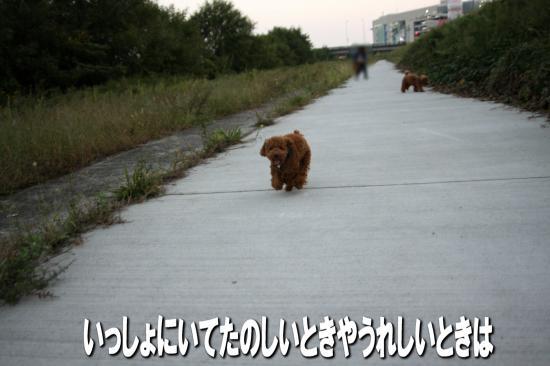 13_20081021182648.jpg
