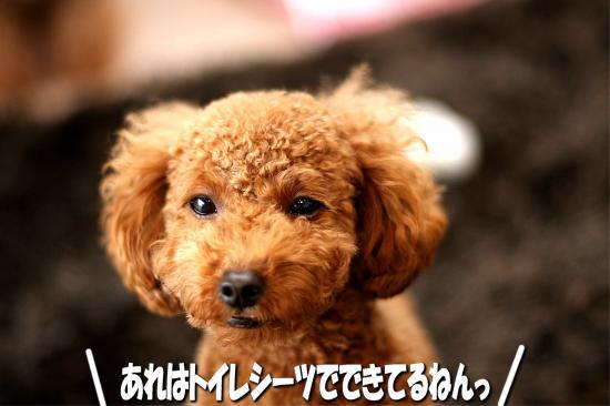 13_20081108130412.jpg