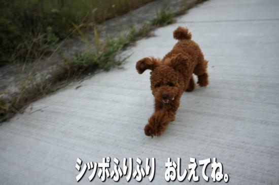 15_20081021182750.jpg