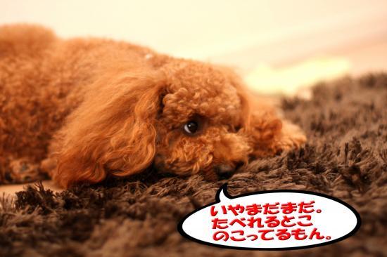 15_20081023111230.jpg
