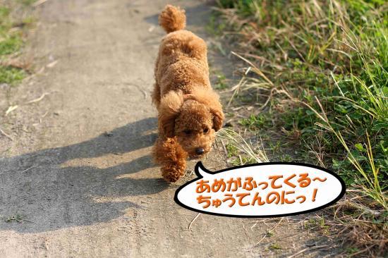 15_20081124001858.jpg