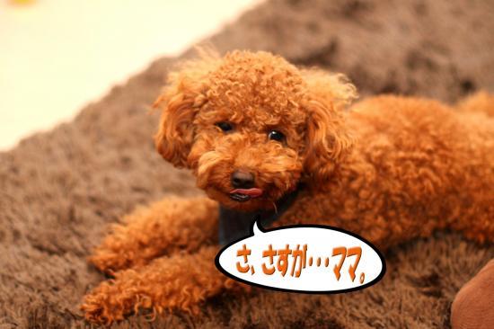 17_20081023111250.jpg