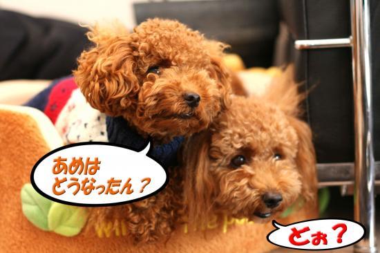 1_20081027010809.jpg
