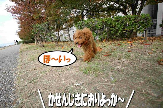 1_20081118163659.jpg