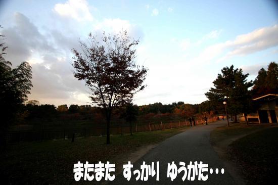 1_20081126161433.jpg